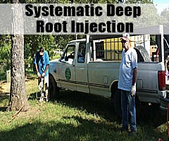 Systematic Deep Root Injection