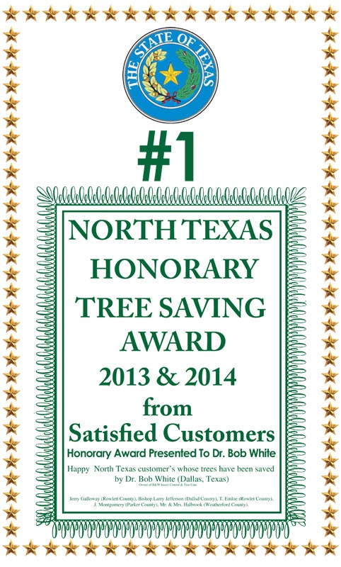north-texas-honorary-award-with-stars