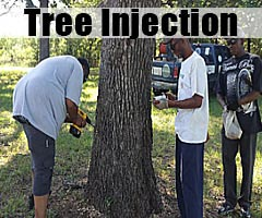 Tree injection